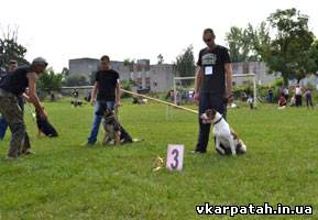 виставка собак Східниця