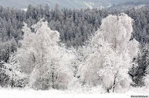 фото східниці
